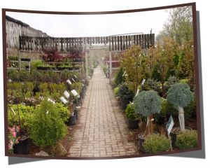 Swartz Nurseries stock guarantee and limited warranty